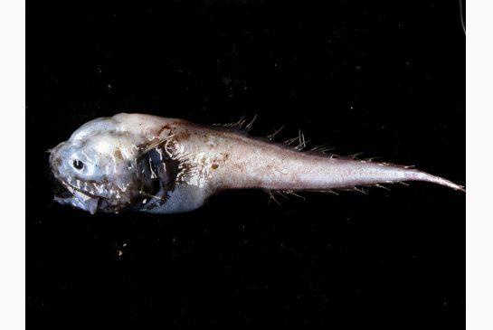 assfish.jpg.size.xxlarge.letterbox